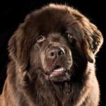 airen-foto-gemaakt-door-lorenzo-martens-van-dag-blad-hond-crop